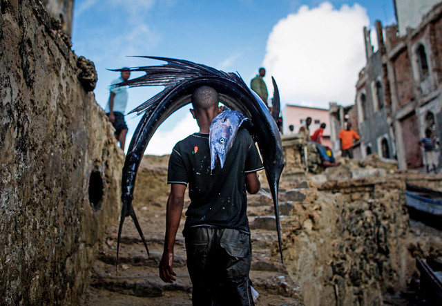 A Somali man carries a large sailfish on his head as he transports it to Mogadishu's fish market in the Xamar Weyne district of the Somali capital.