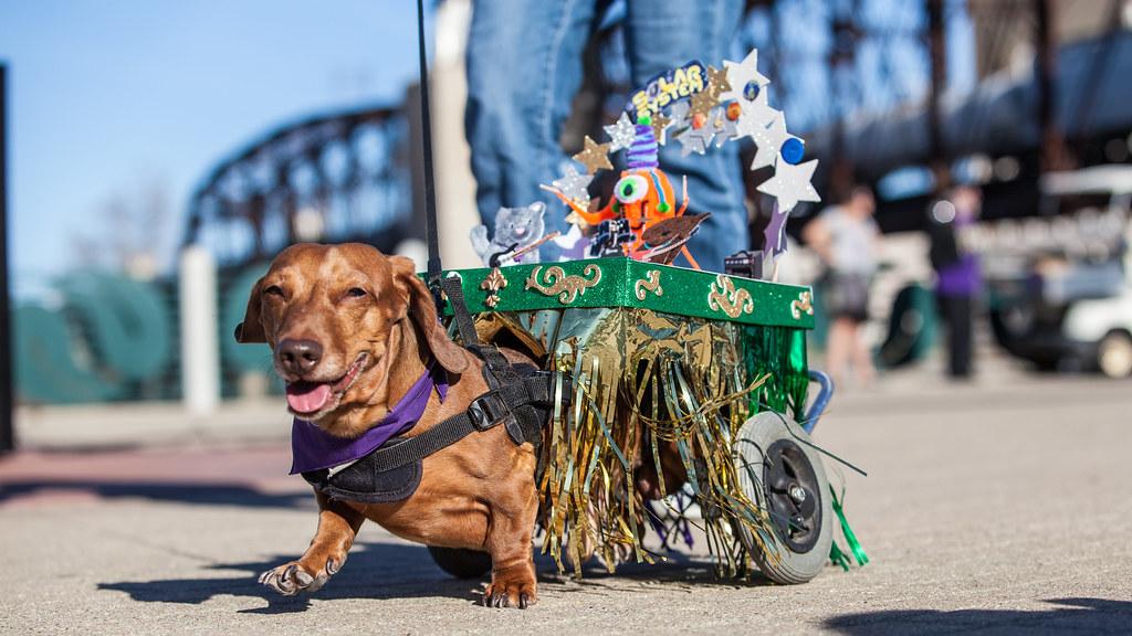 Krewe Of Barkus And Meoux Pet Parade Shreveport La Flickr