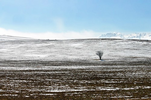 In Wait of Spring | by anii579/ Ani_in Jordan