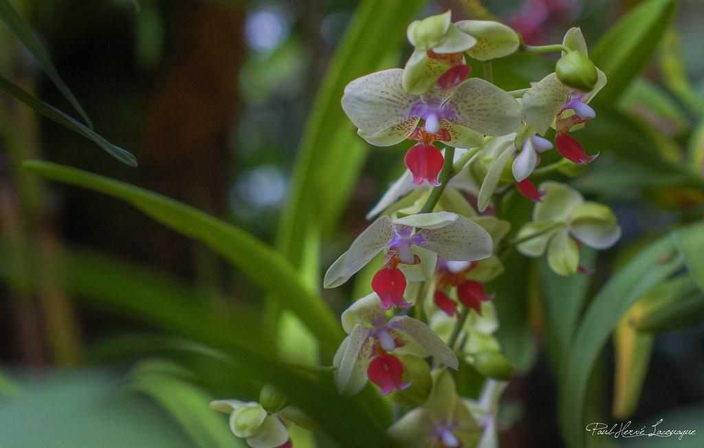 exposition orchid es jardin des plantes 2013 flickr. Black Bedroom Furniture Sets. Home Design Ideas