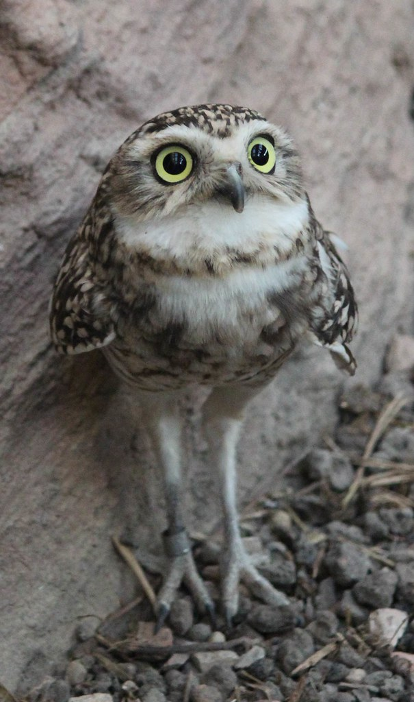 quotes about owl