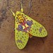Bella polilla amarilla / Beautiful yellow moth
