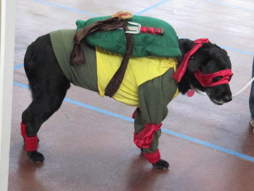 by Star Cat Ninja Turtle Dog! | by Star Cat & Ninja Turtle Dog! | PawsAbilities 2013! | Sherrie | Flickr