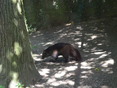 springe 6 locuri de vizitat in Hanovra