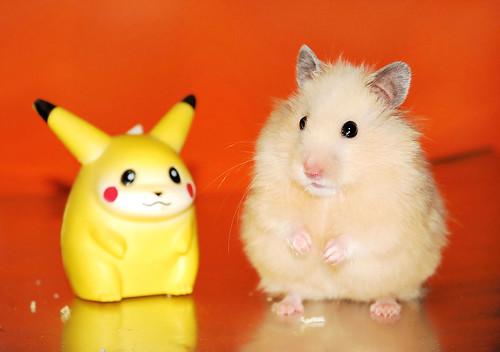 Pikachu miu miu two pokemons pyza flickr - Pokemon miu two ...