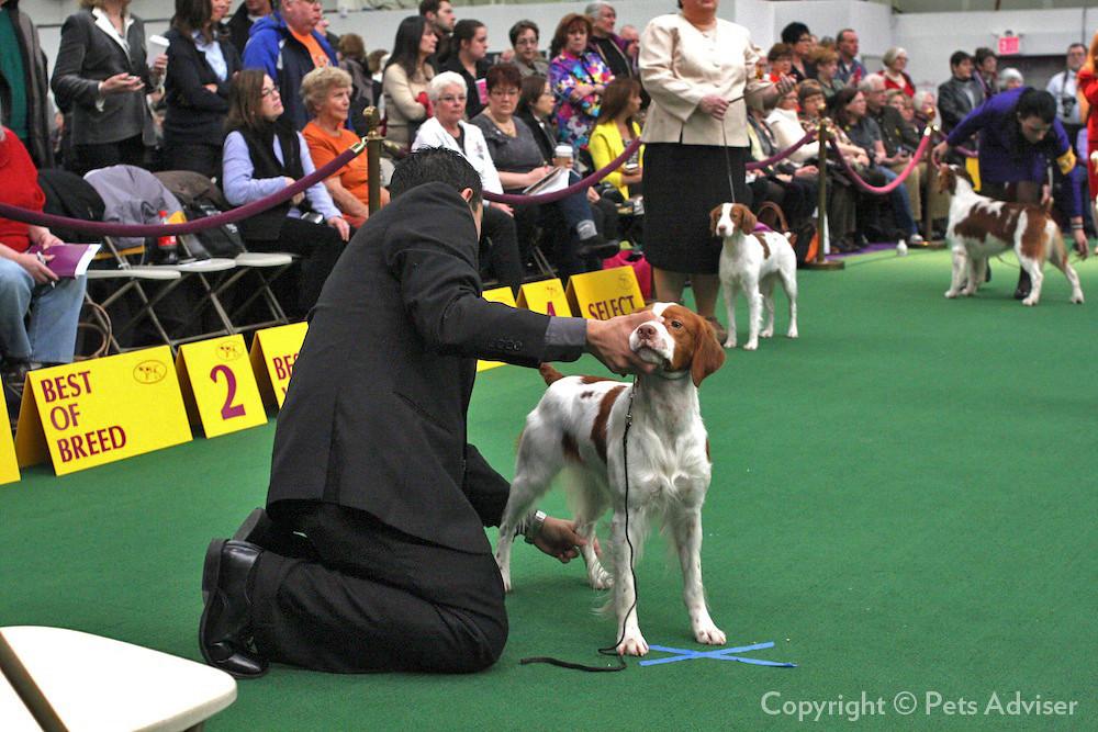 Westminister Dog Show  Winner