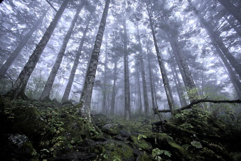 Bosque Shennongjia