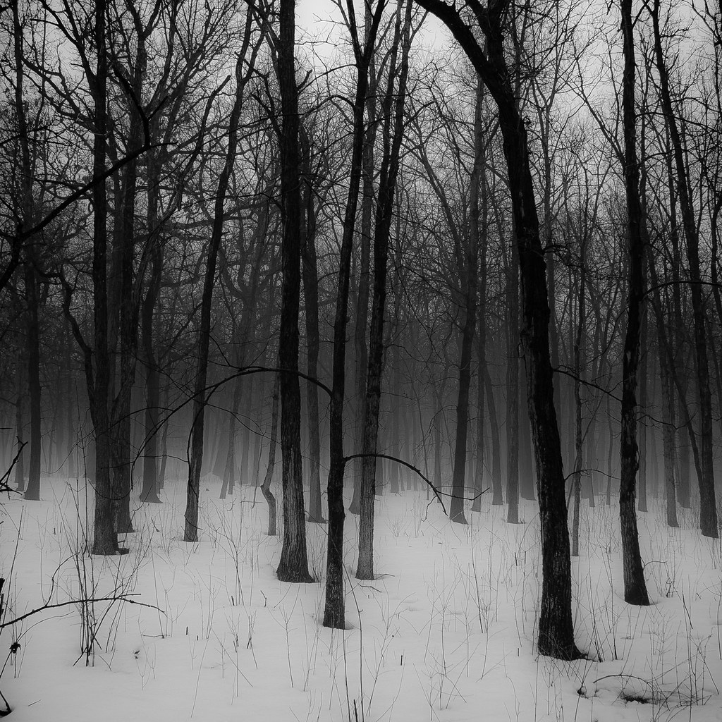 HD Golden light in the white forest Wallpaper | Download ... |Winter Forest Black And White