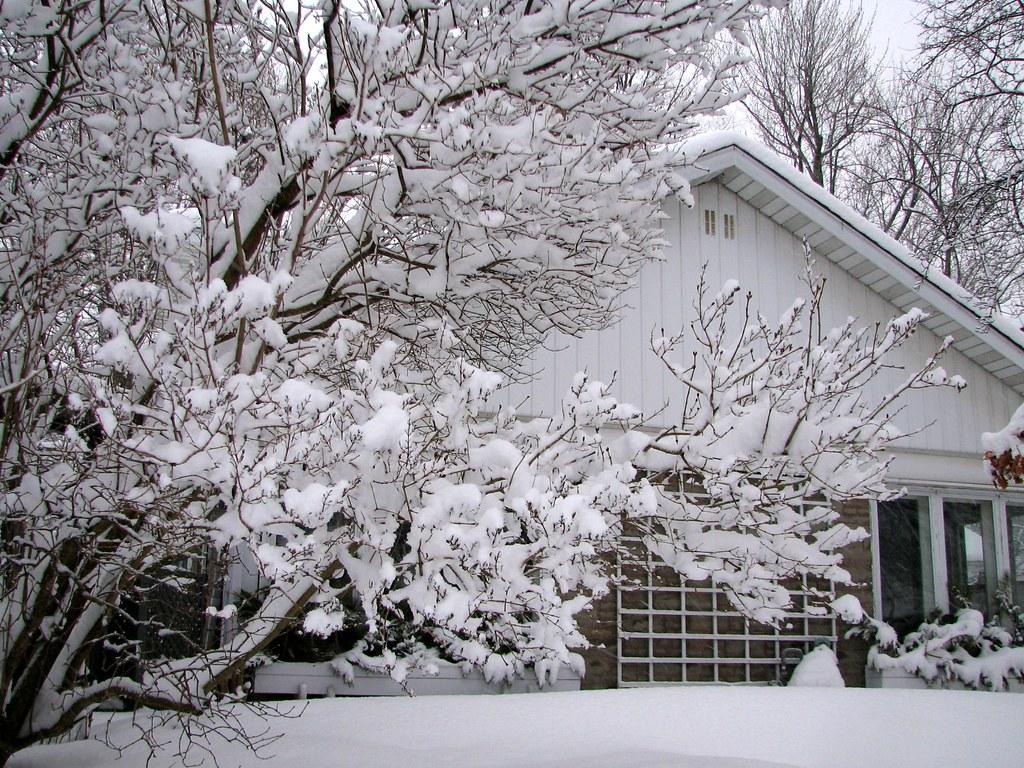 Fleurs de neige floraison d 39 hiver snow flowers winter for Floraison hiver