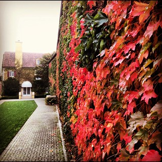 Fall at Jordan Winery | by jordanwinery.com