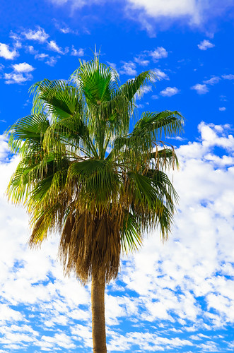 Palm Tree - Tenerife - Canary Islands - Holiday. By Thomas Tolkien | by Thomas Tolkien