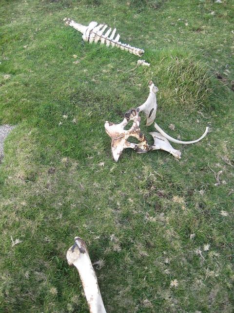 Restos óseos en el Barbanza