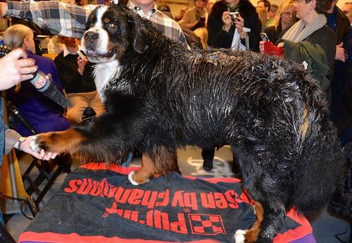 Annual Dog Show