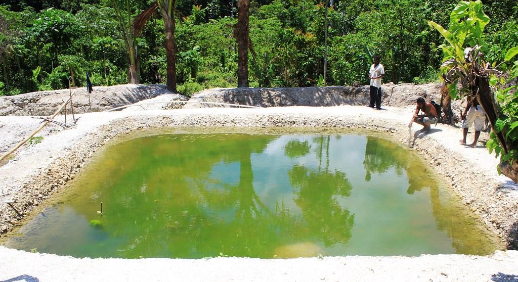 Farming tilapia in malaita solomon islands photo by nath for Fish farm 3