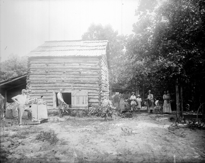 A tobacco curing barn in eastern North Carolina, circa 1900