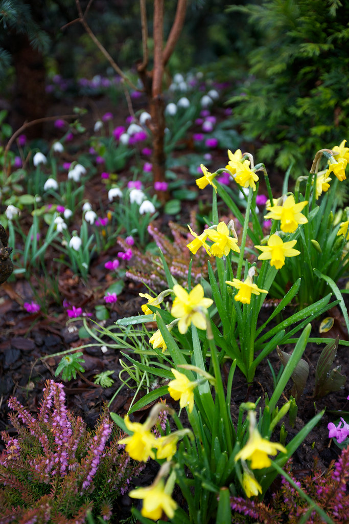early spring flowers pictures - photo #44