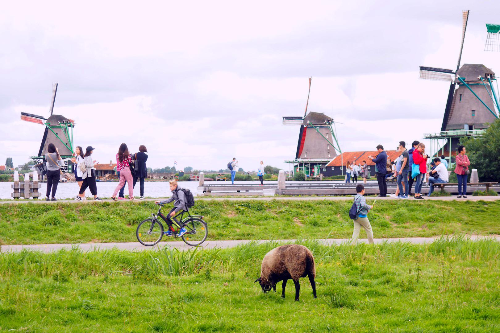 Qué ver en Ámsterdam - Museo qué ver en Ámsterdam - 29397498686 f2df262d50 o - Qué ver en Ámsterdam