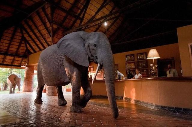 Mfuwe Lodge, South Luangwa National Park, Zambia