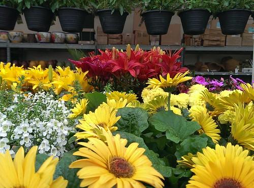 Home Depot Garden Apalapala Flickr