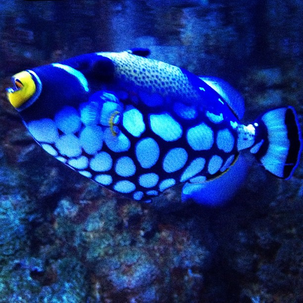 Very cool looking fish | John Vowell | Flickr