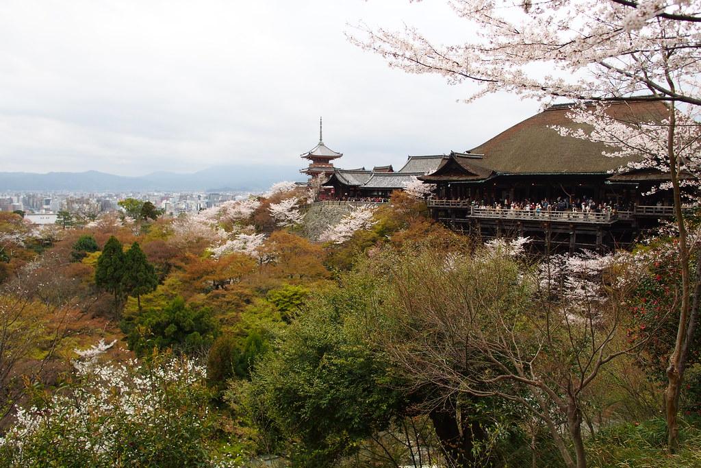 京都のお花見おすすめスポット 清水寺