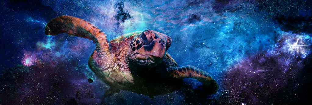 Sea turtle in outer space what even is reality who for Jobs in outer space