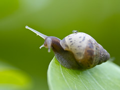 The Snail and his Free riders