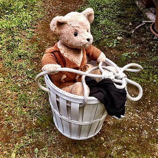 This morning when I went out with the bucket full of laundry, bear wanted to come along and help... | by Martinke_H