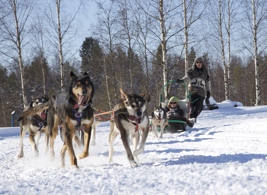 Ever wanted to mush a dog team A trip to Alaska is not complete without mushing a sled dog team We have designed a special cart made just for summer mushing