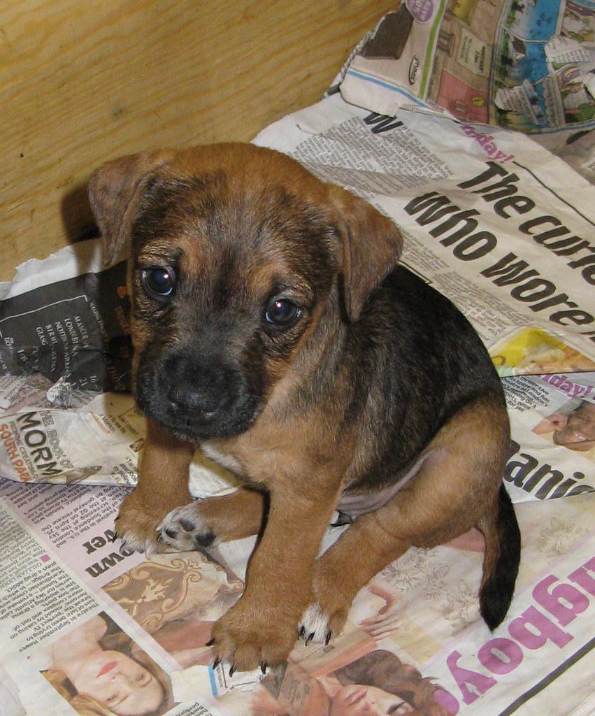 Kyaa The Eyes Cute Puppy Dog Eyes X3 Shiro Ko Flickr
