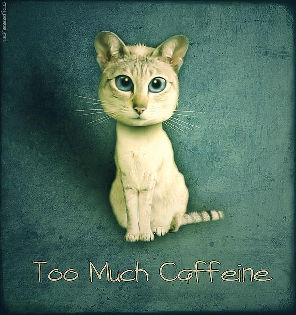 TOO FUNNY | CAFFEINE - BEING HYPER !! | Pinterest ... |Too Much Caffeine Animal