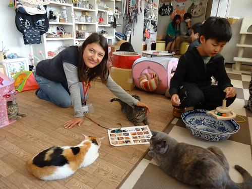 Cat Cafe Near Eau Claire