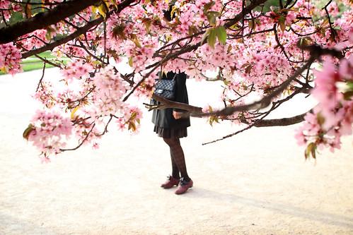Japonaise au jardin des plantes calinore flickr for Au jardin des plantes poem