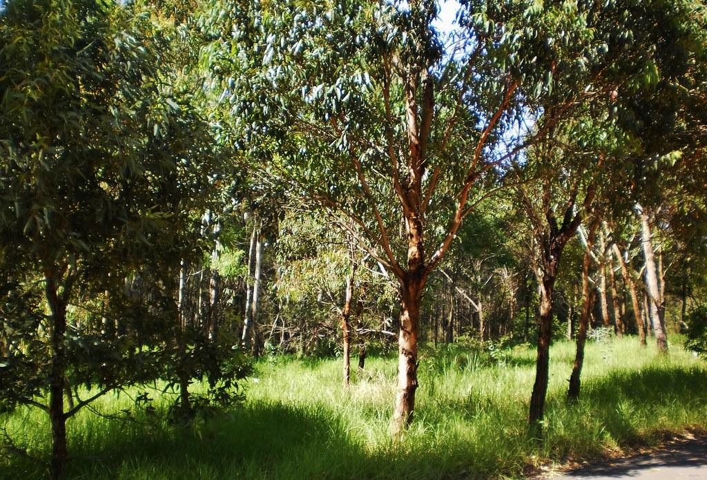 Bicentennial Park Bushland Sydney