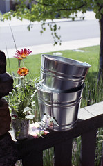 Buckets and Flowers