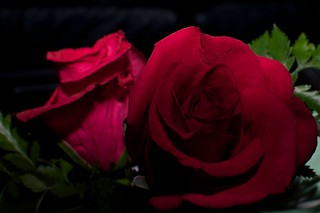 A Rose | by Cindy Andrie