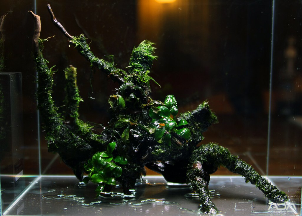 ... Mini S V1 Nano Aquascape Stage One | By Francis Wazeter