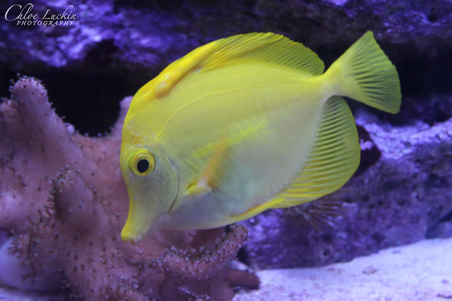 Coral reef fish yellow - photo#10