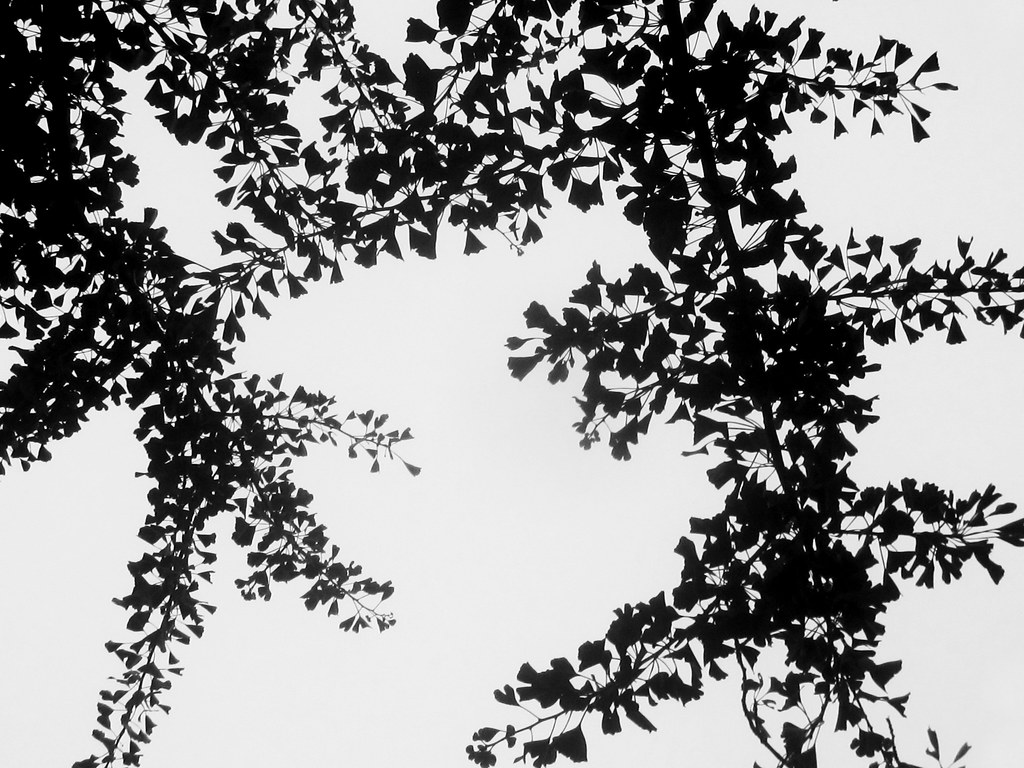 Tree Branch With Leaves Silhouette Leaves  amp  branches silhouettesTree Branch With Leaves