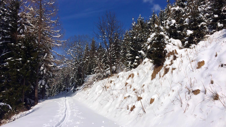 S radostí opouštíme lesní cestu