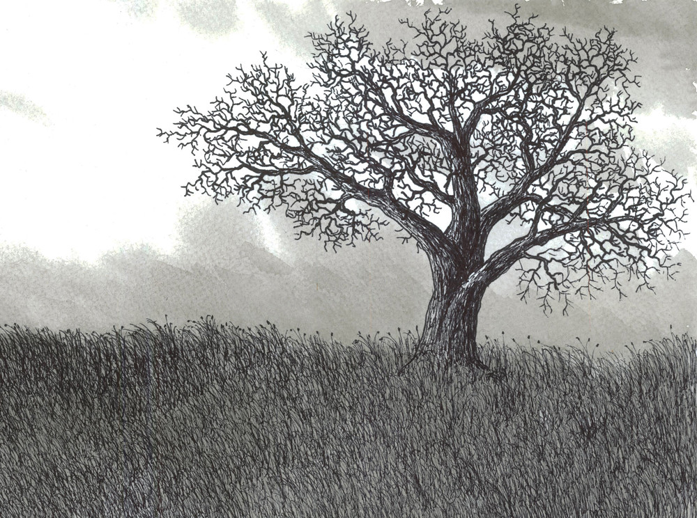 Old oak tree drawing jbjon jonathan baldock flickr
