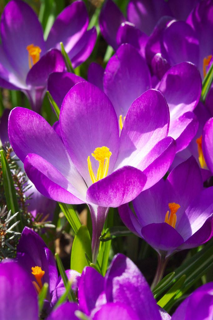 Andys northern Ontario wildflowers  Flowering plants