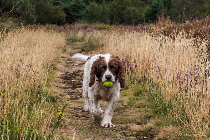 Max with his ball