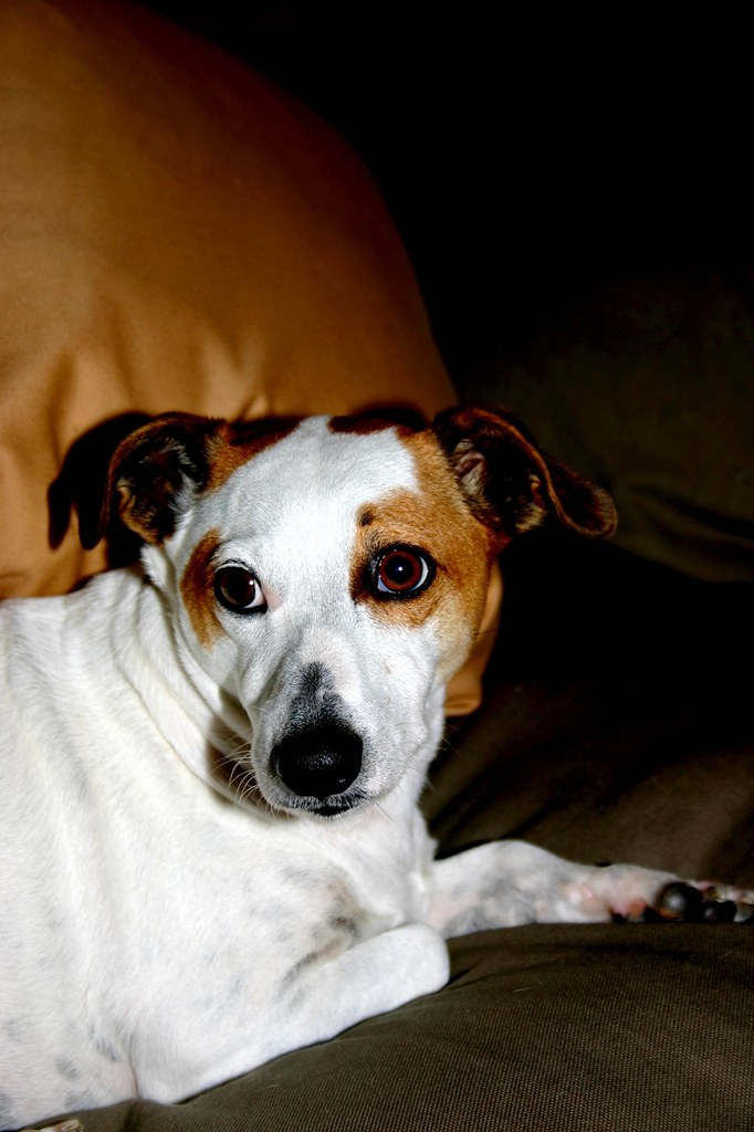 Mobile Pet Dog Grooming Homestead Homestead Fl
