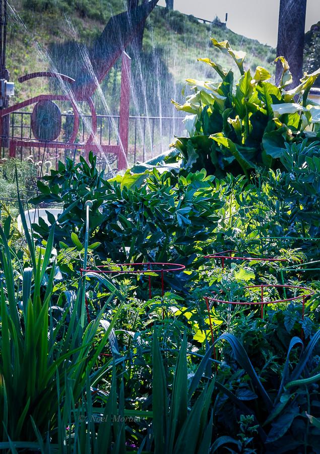 Emeryville Community Garden SF Bay Area Art in the
