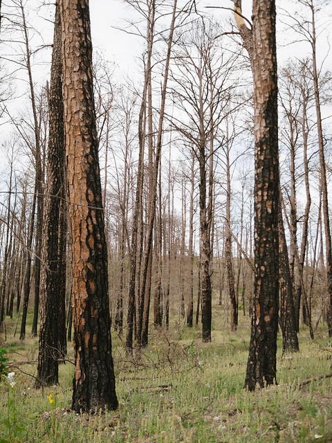 Bastrop State Park Flickr Photo Sharing