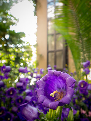 Panasonic 7-14mm Test: Purple Bell 1 | by Entropic Remnants