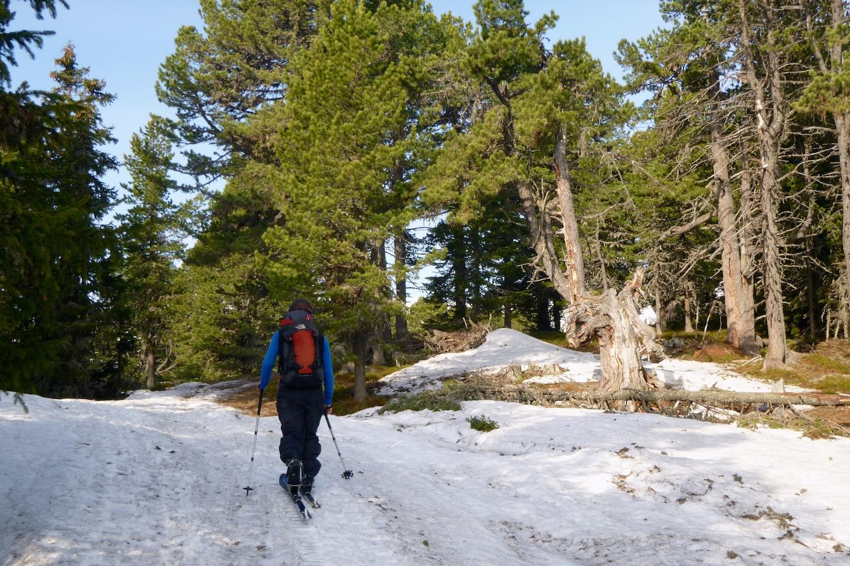 Roman v limbu. Ale ne, Pinus Cembra, česky borovice limba, německy Die Zirbe, dominuje pásmu lesa zdejších hor. Odtud také název kopce Zirbitzkogel.