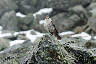 Bird on Mount Si | by ashex