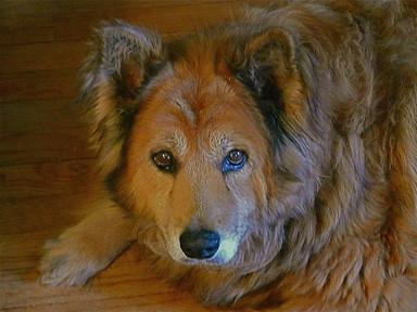 Image Result For Dog Arthritis
